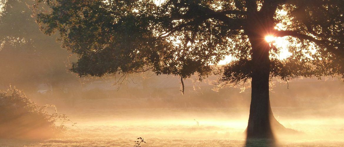 early morning mist illustrating how prayer that heals helps to lift the mist of obscurity from our thought